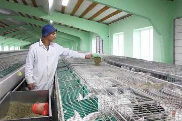 Готовый бизнес-план кролиководства