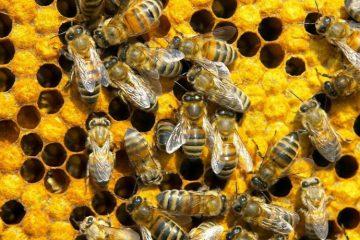 Готовый бизнес-план пасеки пчеловодства
