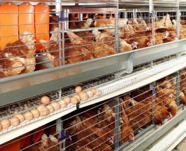Бизнес-план мини птицефермы