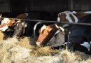 Образец бизнес-плана крупного рогатого скота