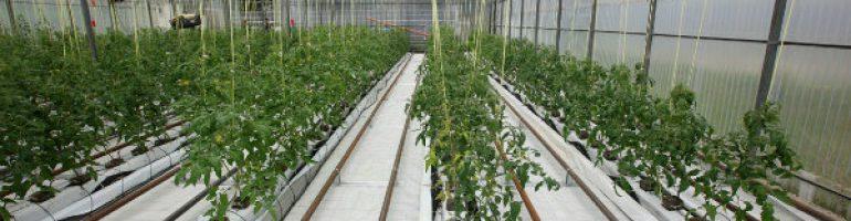 Готовый бизнес-план тепличного хозяйства