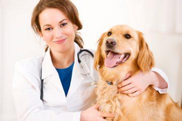 Готовый бизнес-план ветеринарной клиники