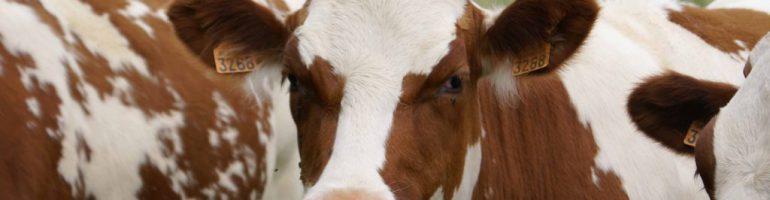 Типовой бизнес-план семейной фермы с быстрой окупаемостью