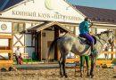 Готовый бизнес план конного клуба для открытия