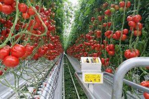 Готовый бизнес-план по выращиванию овощей в теплицах круглый год