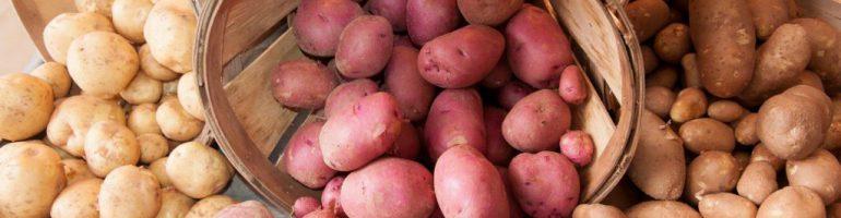 Подробный бизнес-план по выращиванию картофеля на реализацию