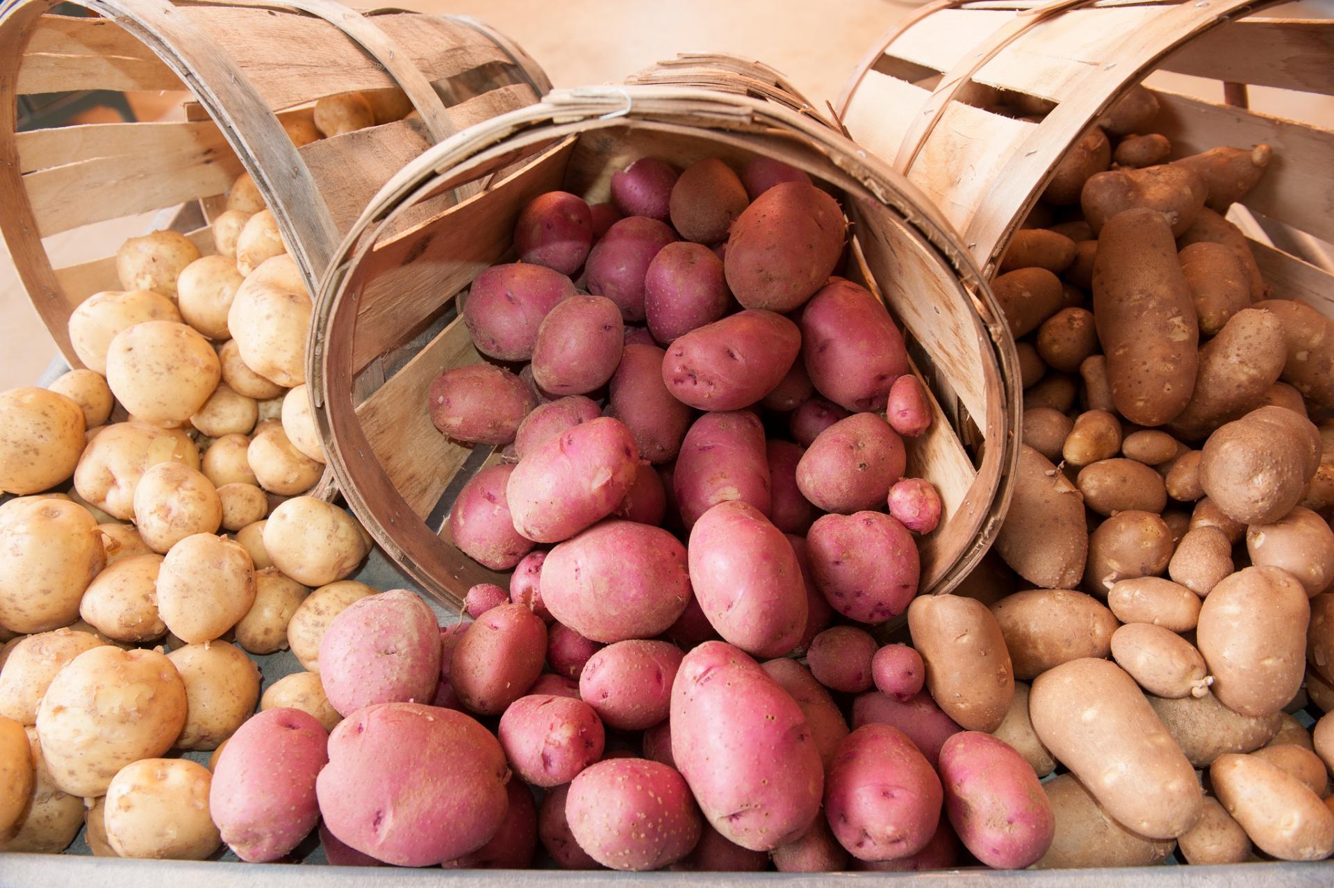 Бизнес план картофелеводство