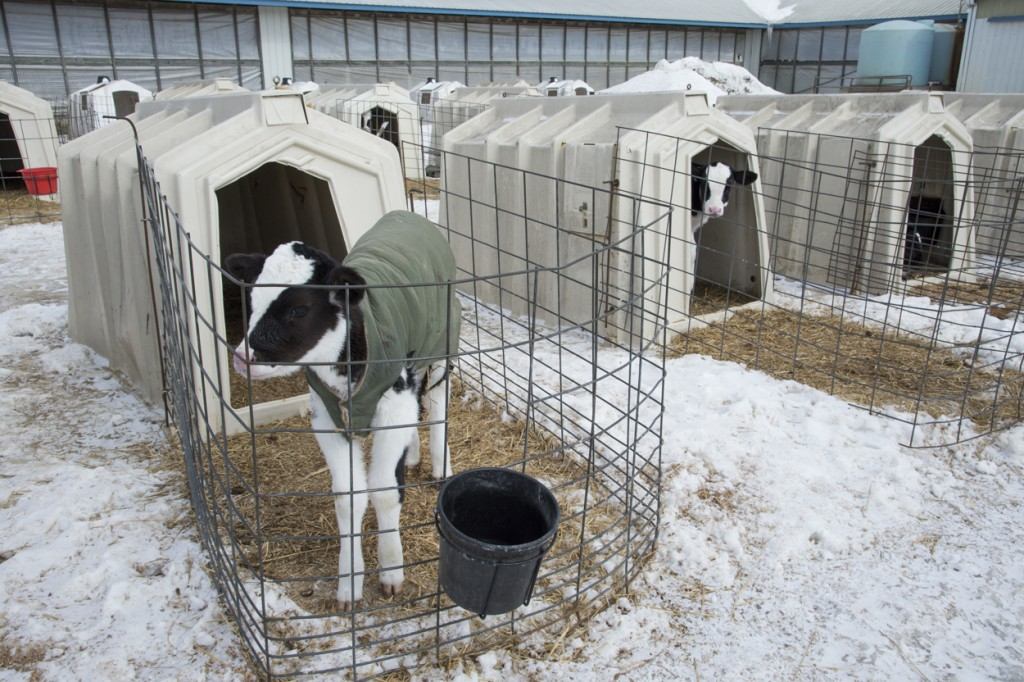 Технология, предусмотренная для выращивания животных