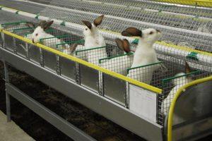 Готовый бизнес-план кролиководства с анализом внешней среды