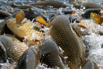 Типовой бизнес-план выращивания рыбы в узв