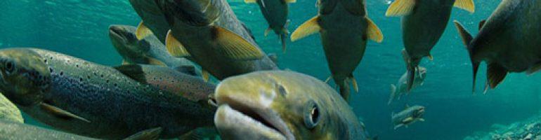 Как преуспеть в бизнесе разведения рыбы