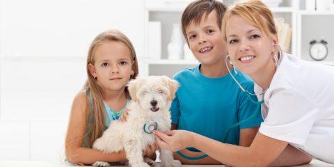 Как открыть ветеринарный кабинет с нуля