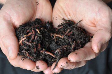 Бизнес выращивания дождевых червей