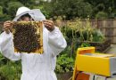 Бизнес идея по разведению пчел