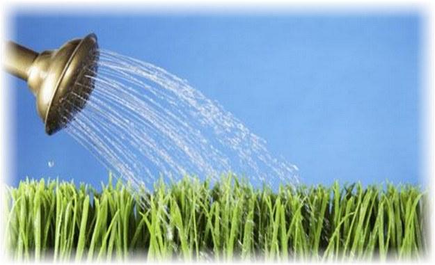Изображение - Выращивание спаржи в домашних условиях как бизнес 1-86