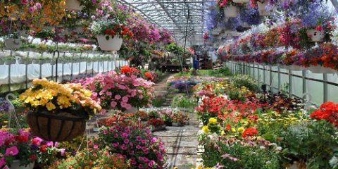 С чего начать бизнес выращивания цветов