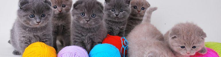 Бизнес на разведении кошек в домашних условиях