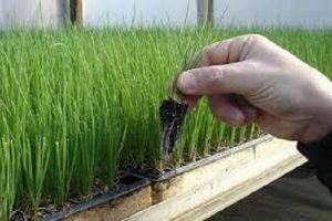 Как начать бизнес выращивания свежей зелени