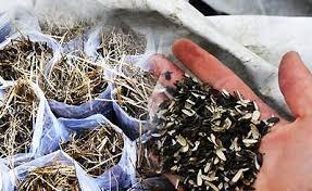 Подготовка к выращиванию грибов