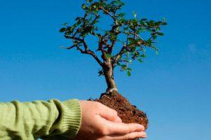 Как заработать на выращивании и продаже саженцев