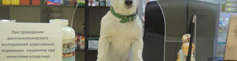 Этапы открытия ветеринарной аптеки
