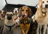 Бизнес-план разведения породистых собак на продажу